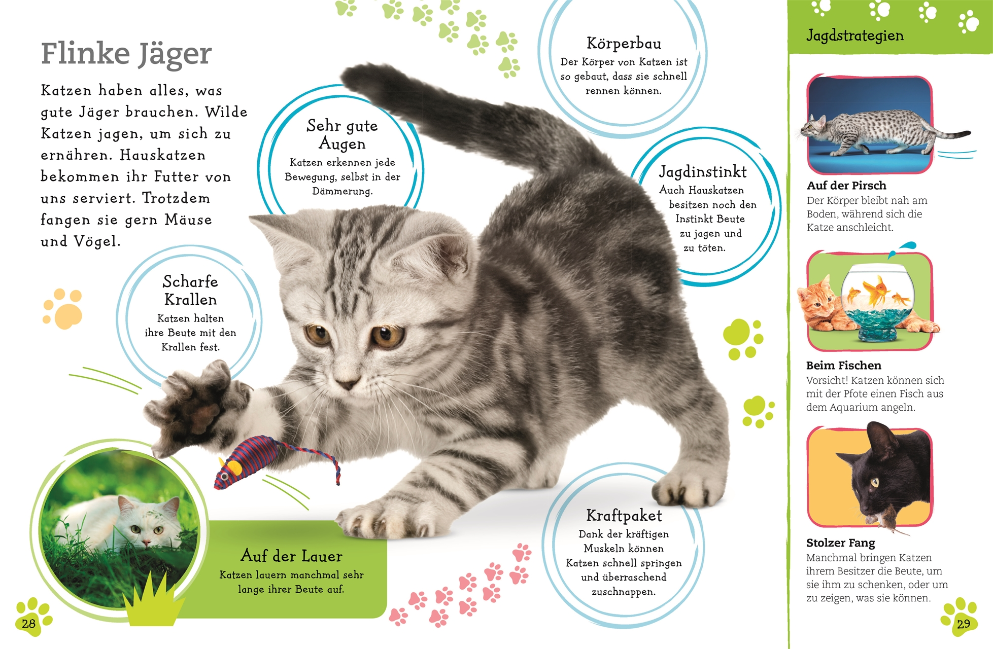 Alles über Katzen Wissen