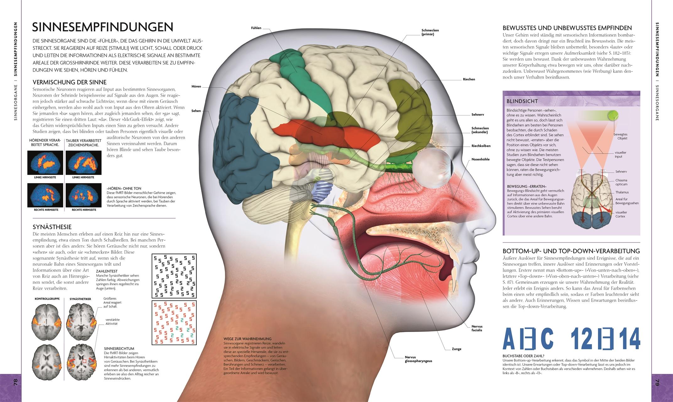 Das Gehirn Ein Beziehungsorgan