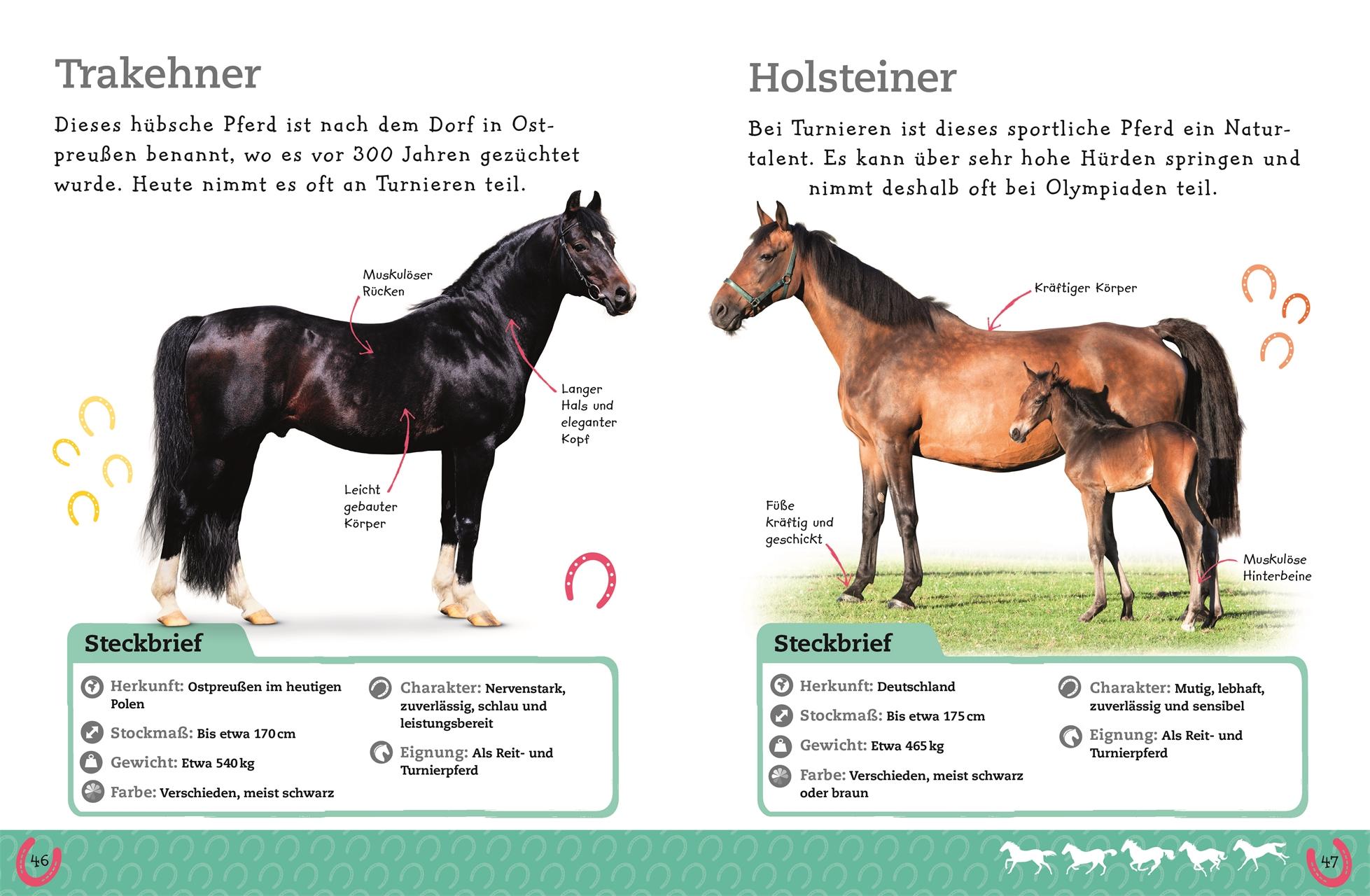 Pferde Und Ponys Dk Verlag